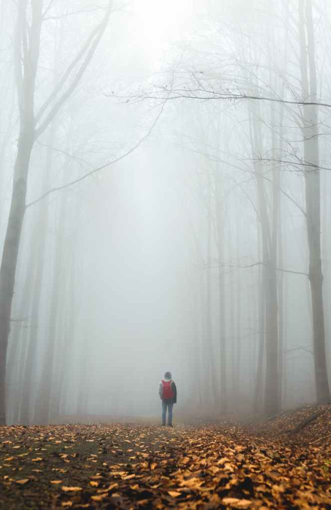 A person alone in a foggy forest.